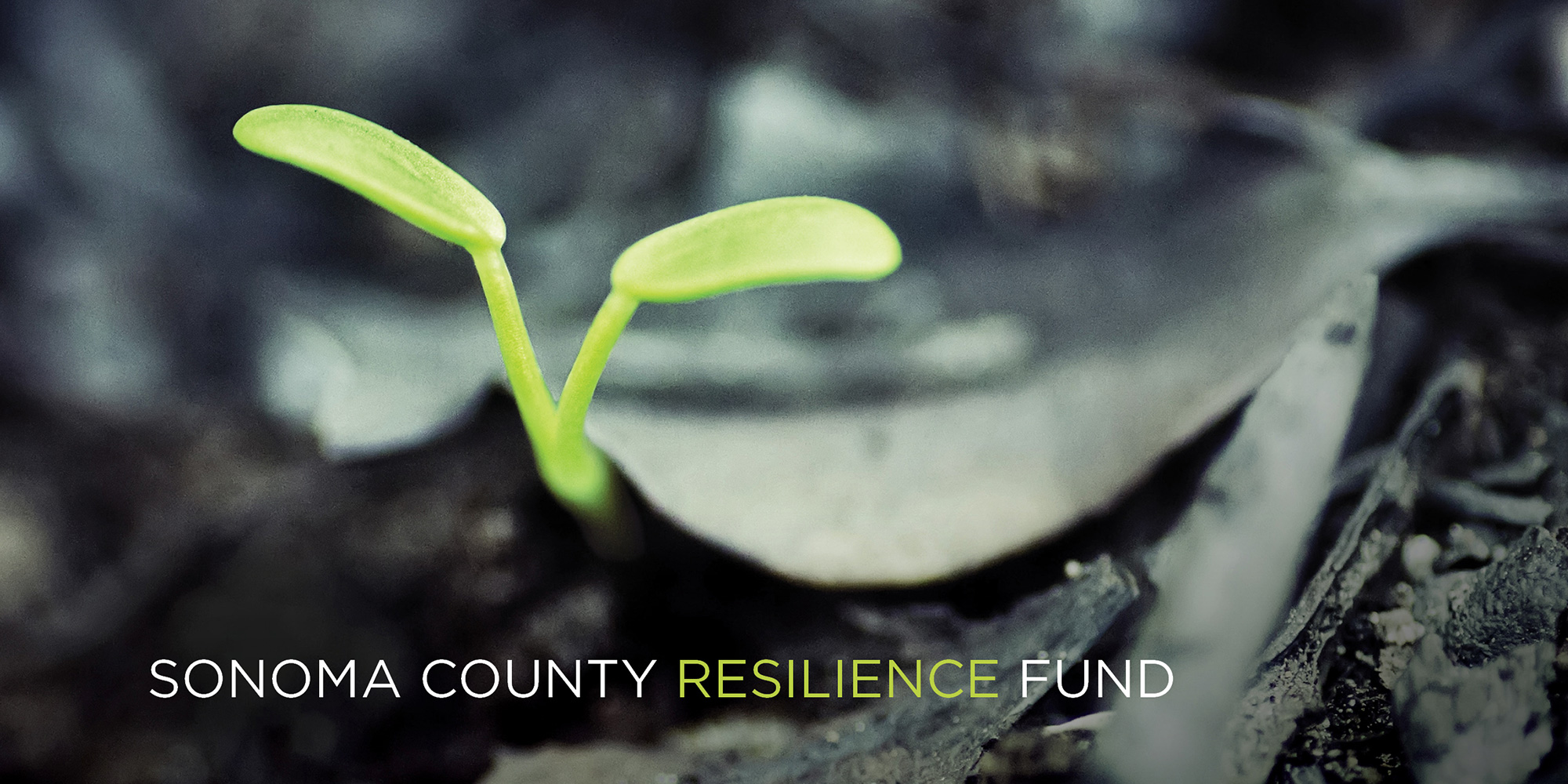 Sonoma County Resilience Fund