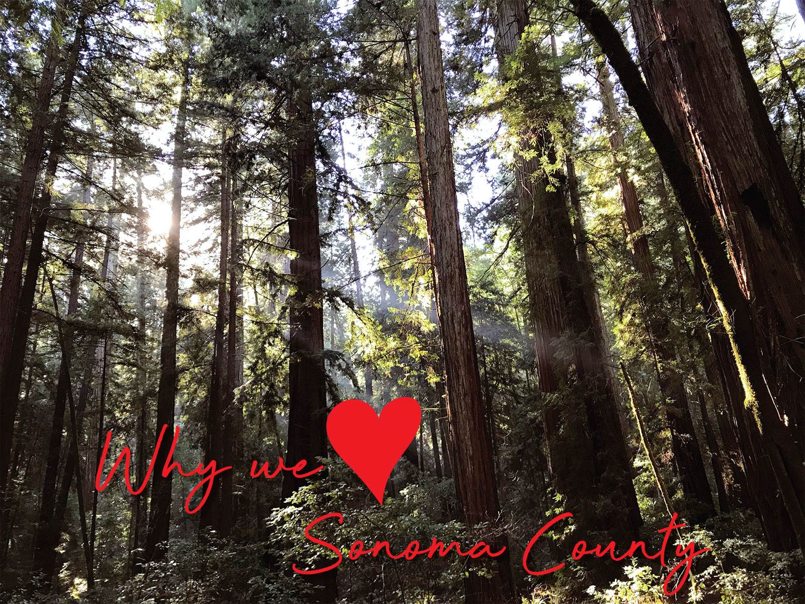 What we love about Sonoma County